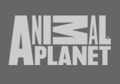 Brainjar Media_Animal Planet_Footer