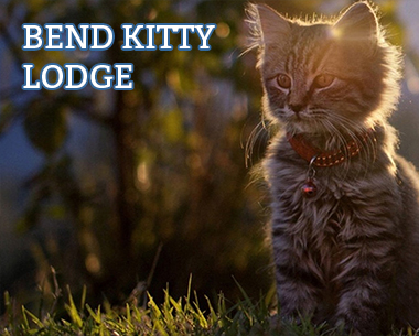 Brainjar_Media_portfolio_bend_kitty_lodge