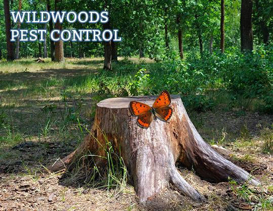 Brainjar_Media_portfolio_wildwoods_pest_control